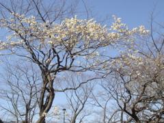 もうすぐ春ですね + 小ネタ_f0077051_093456.jpg