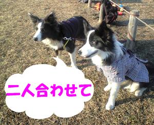 f0132070_123346.jpg