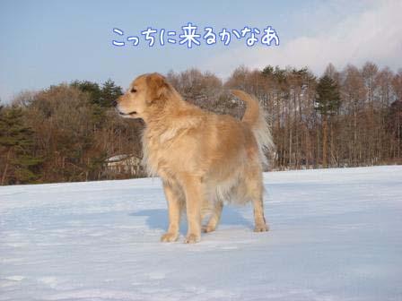 雪原の雪が固まって_f0064906_19283273.jpg
