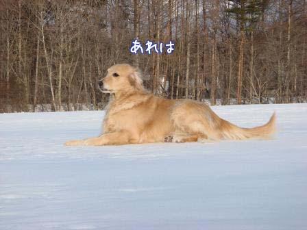 雪原の雪が固まって_f0064906_1928714.jpg