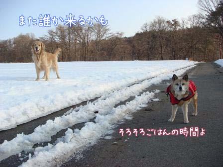 雪原の雪が固まって_f0064906_1931898.jpg