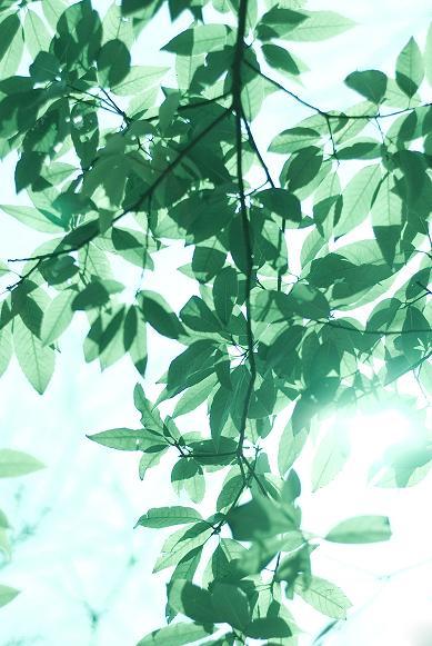 光の春_f0155808_6494688.jpg