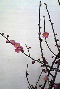 春はそこまで_e0103327_1422823.jpg