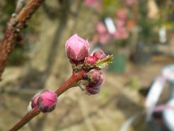 春めく_e0128446_16374079.jpg