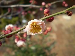 春めく_e0128446_16374762.jpg