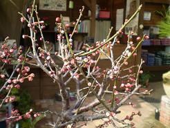 春めく_e0128446_16375483.jpg