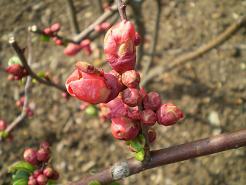 春めく_e0128446_16383428.jpg
