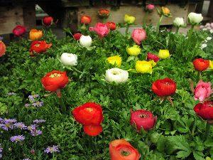 さんハウス四季 「春の香り」_c0141652_1056258.jpg