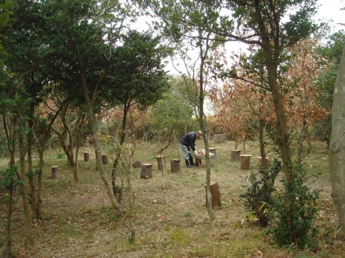 丸太椅子をうみべの森各所に設置・・・定例活動日_c0108460_12223128.jpg