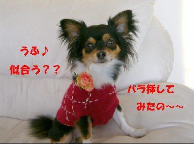 d0089861_3523690.jpg