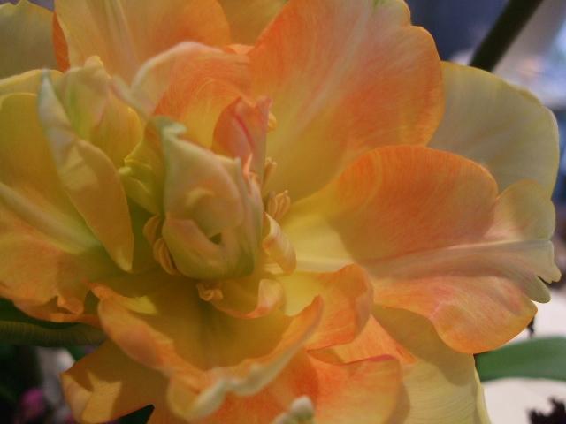 オークリーフ花の教室(エンドウを入れて。)_f0049672_16173356.jpg