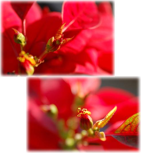 b0026701_20102977.jpg