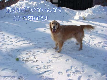 地吹雪で散歩は中止_f0064906_19472516.jpg