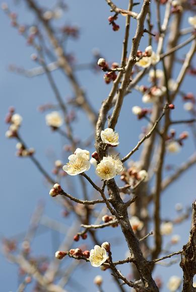 春、わらう_f0155808_0354773.jpg