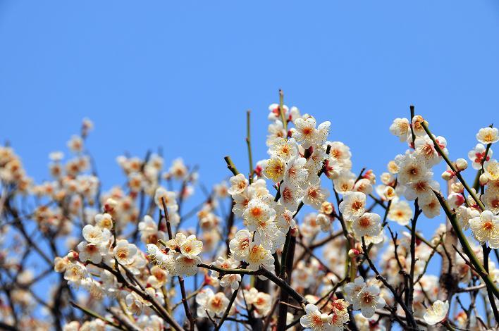 2月の観光 in 太宰府_a0042310_10332813.jpg