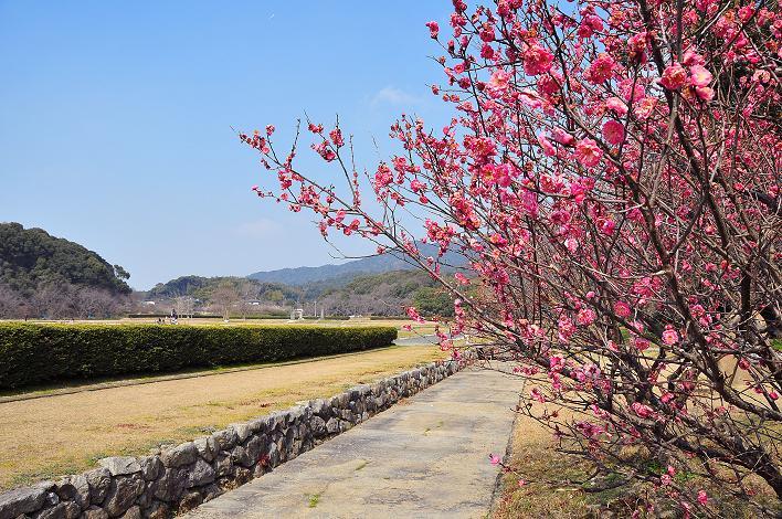 2月の観光 in 太宰府_a0042310_10354597.jpg