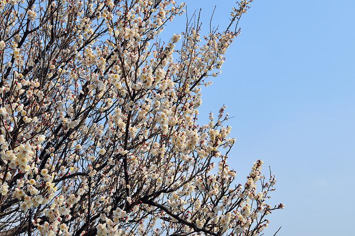 2月の観光 in 太宰府_a0042310_10391387.jpg