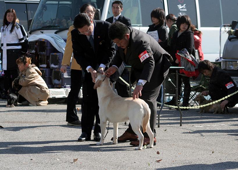 千葉西ファースト全犬種クラブ展_d0151813_1617412.jpg