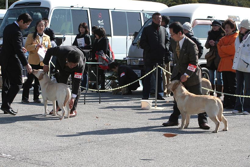 千葉西ファースト全犬種クラブ展_d0151813_1617818.jpg