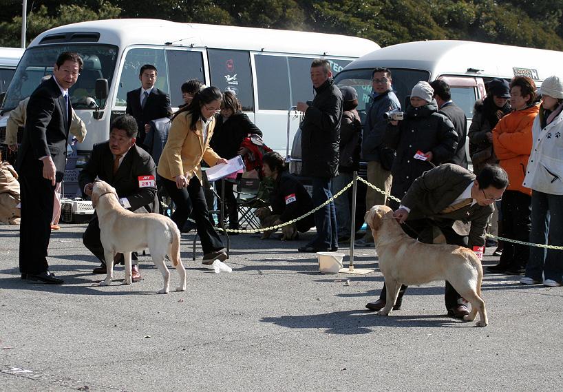 千葉西ファースト全犬種クラブ展_d0151813_16182244.jpg