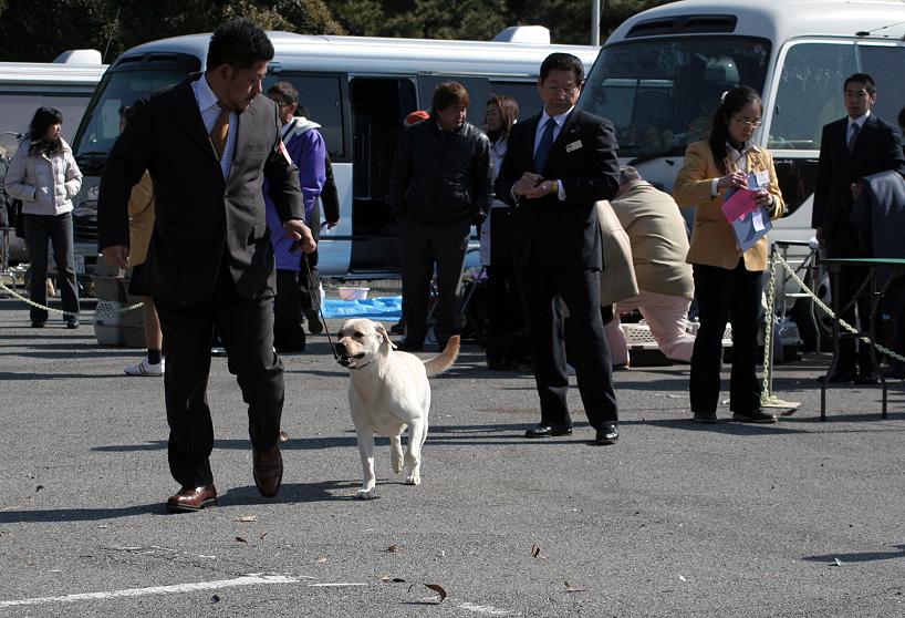 千葉西ファースト全犬種クラブ展_d0151813_16185260.jpg