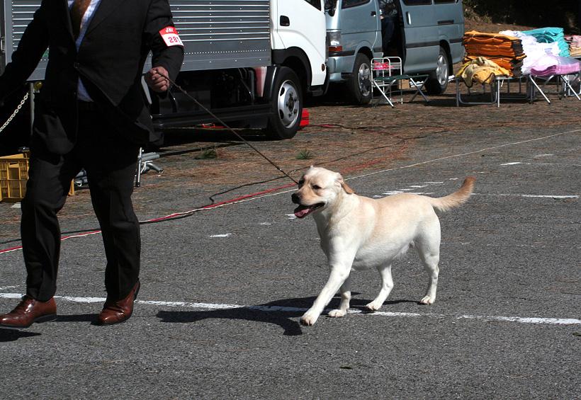 千葉西ファースト全犬種クラブ展_d0151813_16203524.jpg