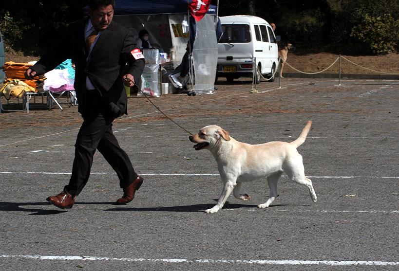 千葉西ファースト全犬種クラブ展_d0151813_1620433.jpg
