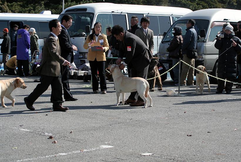 千葉西ファースト全犬種クラブ展_d0151813_16211868.jpg