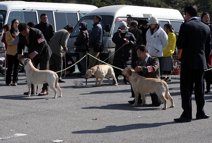 千葉西ファースト全犬種クラブ展_d0151813_16215814.jpg