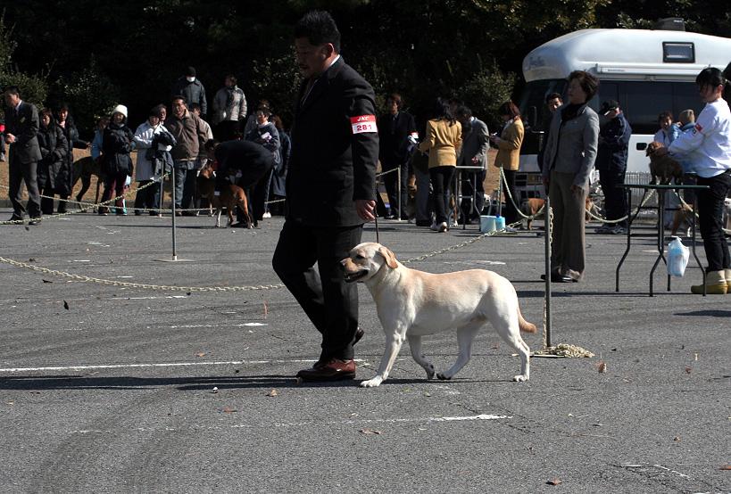 千葉西ファースト全犬種クラブ展_d0151813_1675852.jpg