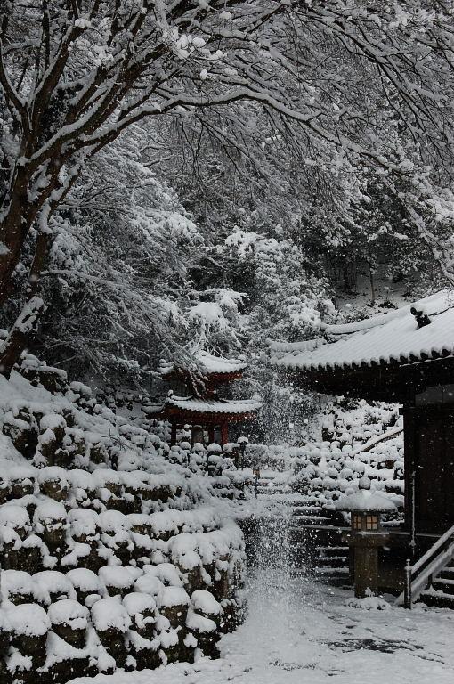 念願叶って雪の京都でパチリ♪。_d0148541_2314096.jpg