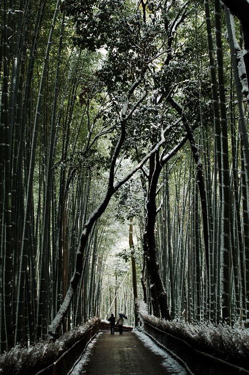 念願叶って雪の京都でパチリ♪。_d0148541_2315487.jpg