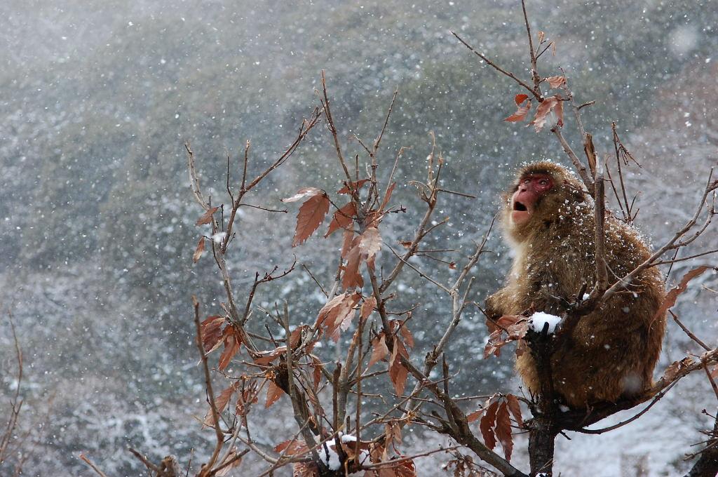 念願叶って雪の京都でパチリ♪。_d0148541_23184385.jpg