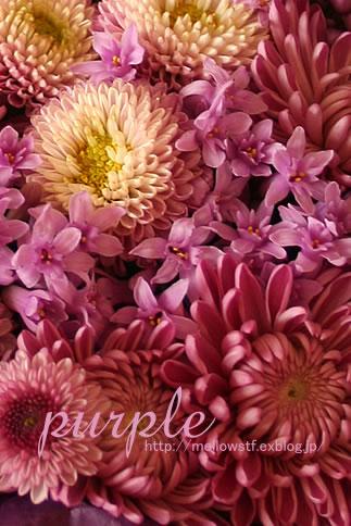 紫いっぱいの花籠_d0124248_16234115.jpg
