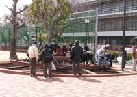駒場野公園花壇にバラ苗を植えました♪_a0094959_1726441.jpg
