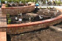 駒場野公園花壇にバラ苗を植えました♪_a0094959_17355912.jpg