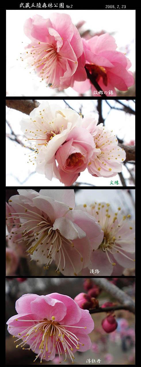 森林公園の梅No.2とメジロ_f0030085_1542026.jpg