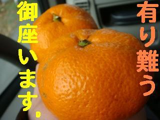 f0138304_8252450.jpg