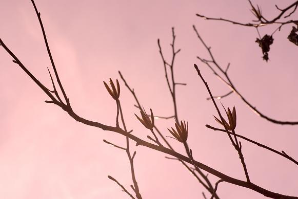 春の気配_f0155808_1461893.jpg