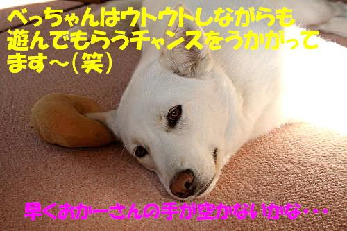 f0121712_1161366.jpg