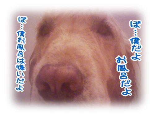 f0109418_2394350.jpg