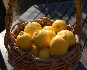 レモン収穫_e0071324_17211129.jpg