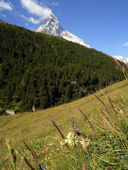 スイスの花と蝶2007(6) 最終日はやっぱりアポロ①_d0054625_21214922.jpg
