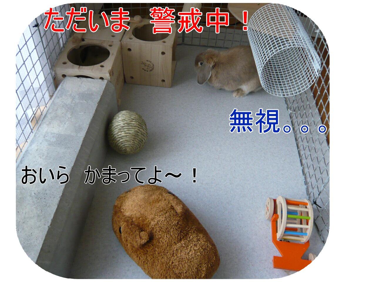 c0151439_9374261.jpg
