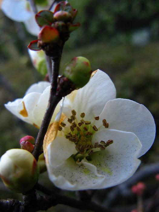 ビルの谷間に咲く花_f0143945_20212945.jpg