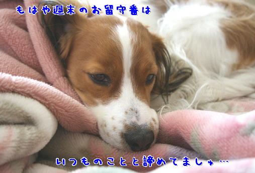 d0013149_99933.jpg