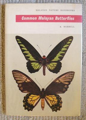 図鑑・・・「マレーシアの蝶」_d0019074_13183753.jpg