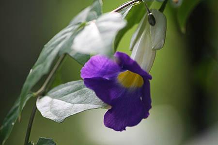 青い花が好きです。_f0030085_1065673.jpg