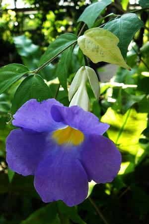 青い花が好きです。_f0030085_107494.jpg
