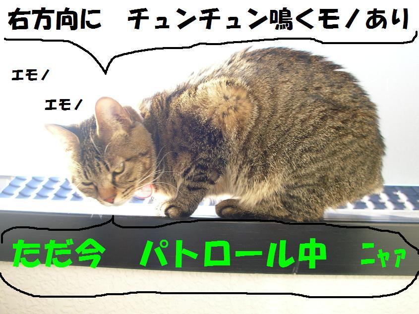 c0139488_15413785.jpg